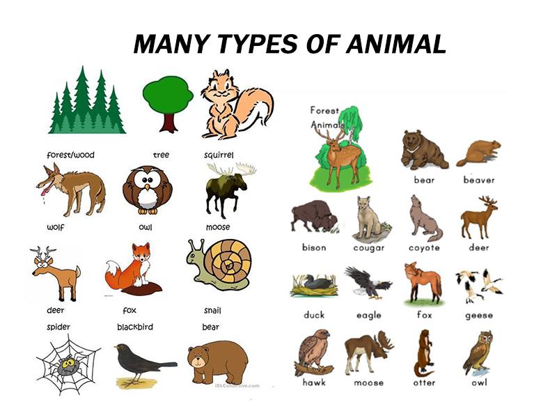 Học tiếng Anh theo chủ đề động vật