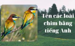 Từ vựng về động vật - Phần 1: Tên các loài chim tiếng Anh