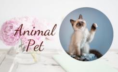 5 mẫu câu giao tiếp chủ đề Animal - Pet tiếng Anh