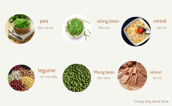 Từ vựng các loại đậu tiếng Anh